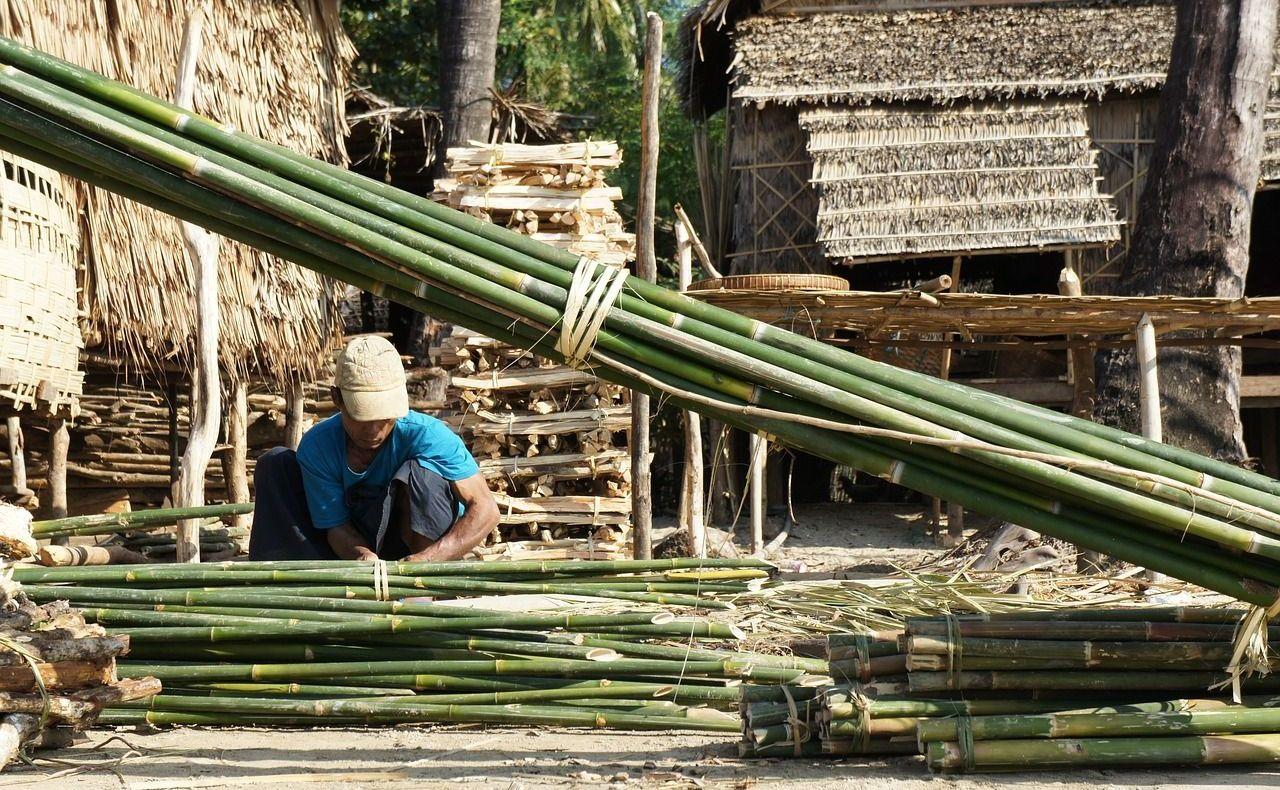 Rohstoff Bambus und seine Bedeutung für Bett und Bettausstattung