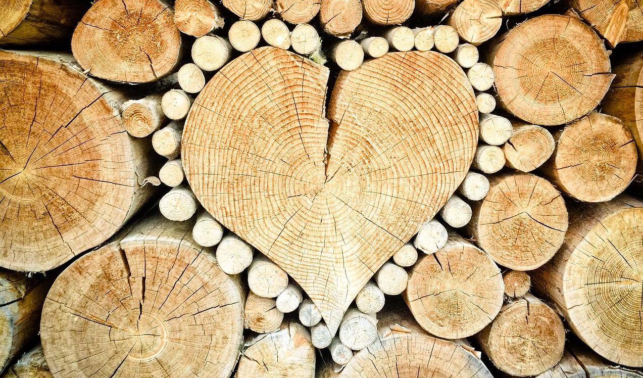 Welches Holz, welche Baumarten werden im Bettenbau genutzt?