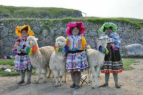 Alpakatiere Herkunft Peru