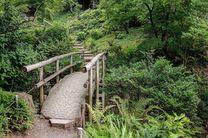 Bambus Brücke 1