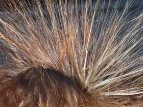 Elektrostatische Aufladung menschliche Haare