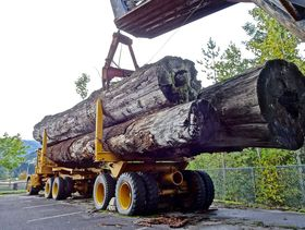 Holz-Transport