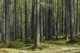 Lärche Wald