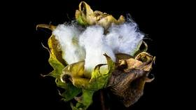 Naturfaser Baumwolle Detail
