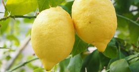 Textilveredelung Greenfirst Zitrone