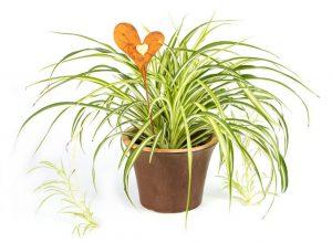 Pflanzen Im Schlafzimmer Diese Arten Verbessern Ihren Schlaf